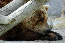 Free Bear Royalty Free Stock Image - 966766