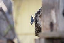 Free Hanging Bird Royalty Free Stock Photo - 969105