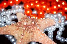 Free Starfish Royalty Free Stock Image - 969326