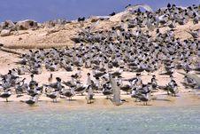 Free Terns & Terns Stock Photos - 969543