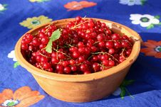 Free Redcurrant In The Old Pot Stock Photos - 969623