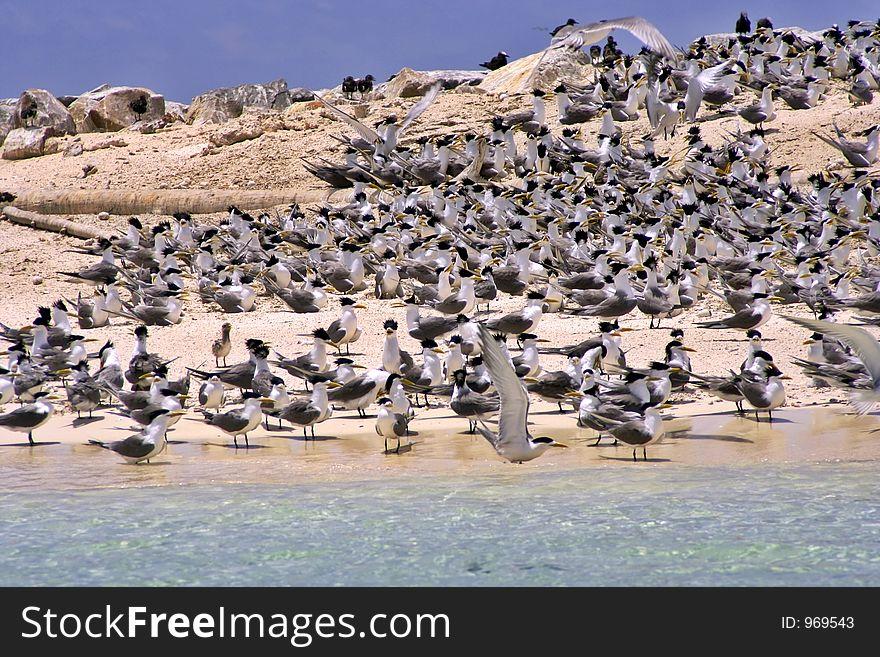 Terns & Terns