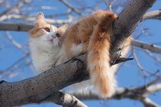 Free Cat On Tree Royalty Free Stock Photos - 9601088