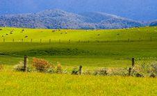 Free Sheep Flock New Zealand Royalty Free Stock Images - 9601309