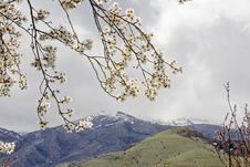 Free Abloom Branch Royalty Free Stock Image - 9602126