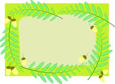 Free Acorns And Ferns Royalty Free Stock Photography - 9602787