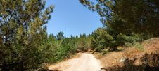 Free Hiking Trail Among The Pine Trees Stock Image - 9603701