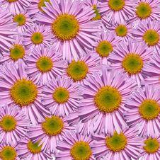 Free Pink Petals Closeup Stock Photos - 9604613