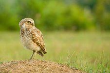 Free Owl Stock Photography - 9604802