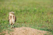 Free Owl Stock Photography - 9604882