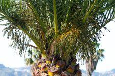 Free Palm Tree Detail Stock Photo - 9606020