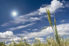 Free Wheat Field Royalty Free Stock Images - 9606329
