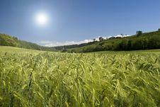 Free Wheat Field Stock Image - 9606741