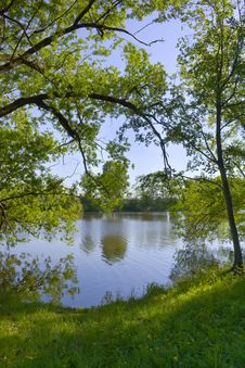 Free Trees Were Inclined Over Water Stock Images - 9608444