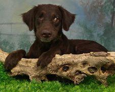 One Eyed Puppy Stock Image