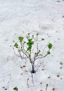 Free On Ice. Stock Image - 9609471