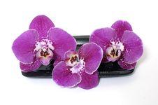 Free Zen Still Life Royalty Free Stock Image - 9609496