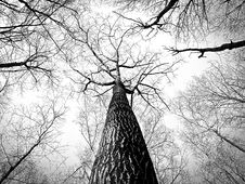 Free Tree, Branch, Black And White, Woody Plant Royalty Free Stock Photos - 96027098