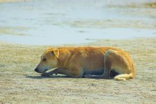 Stray Dog Hanging Around On The Beach Enjoying The Water Royalty Free Stock Photography