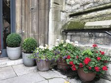 Free Flower Pots By Wall Royalty Free Stock Photography - 96054817