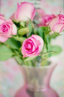 Free Pink Rose Buds Stock Photos - 96054923