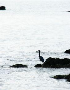 Free Silhouette In Sea Stock Photo - 96055080