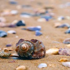 Free Shell On The Beach Stock Images - 9610194