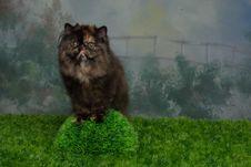 Free Kitty Tuki Stock Images - 9610344