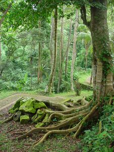 Free The Tropical Road Going Downwards Stock Photos - 9610483
