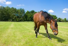 Free Horse Royalty Free Stock Photos - 9612518