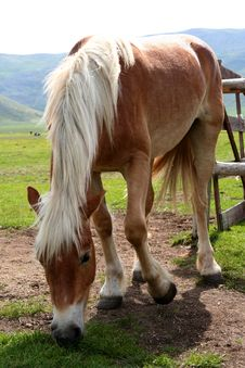 Free Horse Eating Grass In Castelluccio Royalty Free Stock Photos - 9612548