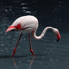 Free Pink Flamingo Stock Image - 9612551