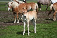 Free Foal And Horses Royalty Free Stock Images - 9612729