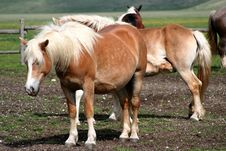 Free Horses In Castelluccio Stock Photos - 9612823