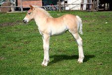 Free Foal Stock Photo - 9612920