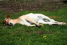 Free Asleep Foal Royalty Free Stock Photo - 9613015