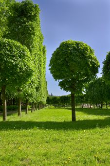 Free Avenue Of Trees In Well-groomed Park. Royalty Free Stock Photos - 9613068