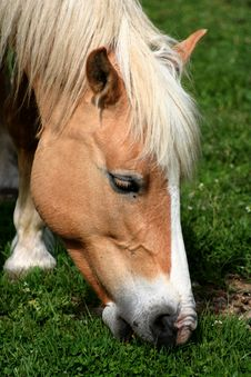 Free Horse Eating Grass / Detail Stock Images - 9613074