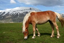 Free Horse Eating Grass In Castelluccio Royalty Free Stock Photos - 9613118