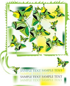Free Green Butterfly Royalty Free Stock Photography - 9613437