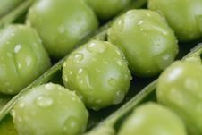 Free Green Peas Stock Photography - 9613582