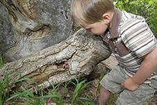Free Boy Plays In Hollow Tree Royalty Free Stock Images - 9613639