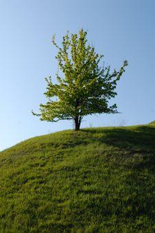 Free Lonely Tree Royalty Free Stock Photos - 9613788