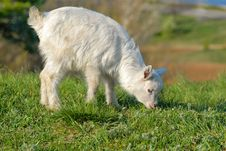 Free Little Goat Stock Photography - 9614132