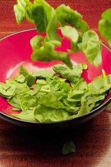 Free Salad Toss Royalty Free Stock Photos - 9614858