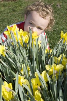 Smelling Daffodils Stock Photography