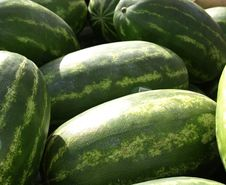 Free Watermelon Stock Photo - 9615740