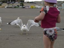Free Little Girl Feeding Seagulls. Royalty Free Stock Images - 9615959