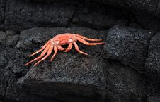 Free A Little Crabby Royalty Free Stock Images - 9618169
