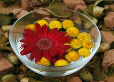 Free Flowers In Water Stock Images - 9618644